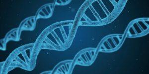DNA Strands - Hormones Affect Your Health